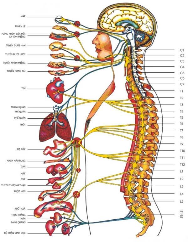 Thoái hóa cột sống cổ và thắt lưng