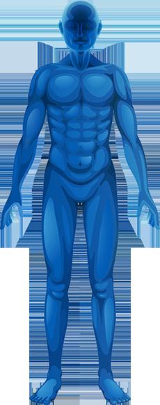 anatomy_w230